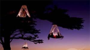 Zelte in Bäumen